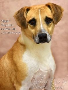 ✴8•6•17 SL✴ MY NAME IS BELK! PLEASE DON'T LET THEM KILL ME!  Dogs for adoption,euthanization,rescue,sponsor