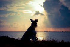 #petloss Pet Loss Grief, Grief Counseling, Pets, Animals, Animales, Animaux, Animal, Animais, Animals And Pets