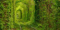 "The ""Tunnel of Love"" in Klevan, Ukraine"