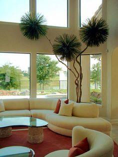 Ornamental Indoor Plants  |  #bringtheoutsidein #green