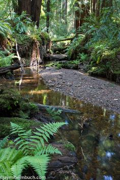 Soak in the solitude at Butano State Park Take a walk among the redwoods in this serene park in the Santa Cruz mountains.