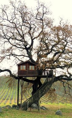 Old trees house & altes baumhaus & vieille maison d'arbres & casa . Old trees house Luxury Tree Houses, Cool Tree Houses, House Trees, Wooden Tree House, Building A Treehouse, Treehouse Ideas, Tree House Designs, Old Trees, Blue Pictures