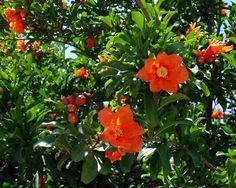 Знаете ли вы, как растут ваши любимые фрукты, овощи, орехи, специи? - discoverArt