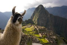 see machu pichu with a lama.. yes please!