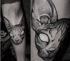Sphynx Cat -> Robert A Borbas/ HUNGARY