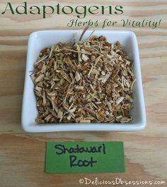 Adaptogens: Herbs for Vitality - Shatavari Root | deliciousobsessions.com