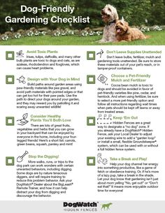 What to Plant For a Dog-Friendly Garden | Dog friendly garden ...