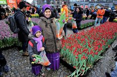 1/16/2016. It is not Spring yet, but the season has already started today at the National Tulpendag on Dam square in Amsterdam. © ANP #amsterdam #newsandevents