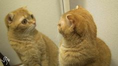 The Most Narcissistic Cats In The World