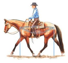 "Horse Training to Develop an Elastic ""Trampoline"" Back, Part 1: When a horse moves freely from the back to the front he engages his abdominal core muscles and lifts his back. The rider feels an elastic bounce, like bouncing on a trampoline. Jean Abernethy illustration"