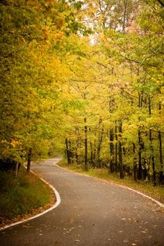 Tunnel of Trees Scenic Drive in Michigan | Midwest Living