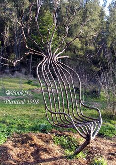 Tree Art, shaping this tree to form a chair. How cool.