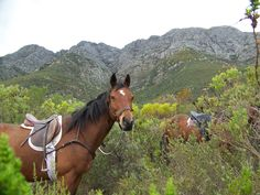 Beautiful mountains and horses on the Witzenberg Trail, Horse About, Cape Winelands