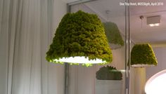 mosslight lamp