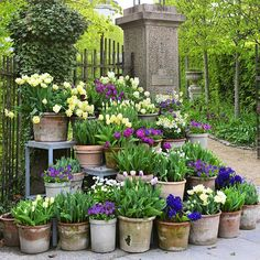 Tulips in pots at the entrance. The picture is some years old. Look forward to show the colour scemes of this year. It will appear in few weeks #flowers #blomster #garden #plants