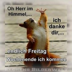 I wish you a nice Friday Funny Friday Memes, Funny Memes, Wise Quotes, Funny Quotes, Weekend Gif, Funny Instagram Memes, Berlin, Dark Humour Memes, Entrepreneur