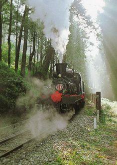 Alishan train, Chiayi #Taiwan 嘉義 阿里山火車