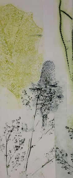DRAGONS & BANKSIAS SERIES: Latest work for my solo exhibition opening May 2014 Solar plate Etching Port Jackson Press Firestation Print Studio