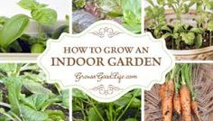 Image result for easiest herbs to grow indoors