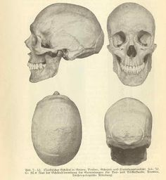 European skulls found in Ohio's ancient mounds