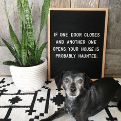The most versatile and minimalist decoration for your home - felt letter board. Totally in love with and all of the fun boards they create! Inspirational and funny letter board quotes. The Letter Tribe Work Quotes, Sign Quotes, Me Quotes, Funny Quotes, Sign Sayings, House Quotes, Word Board, Quote Board, Message Board