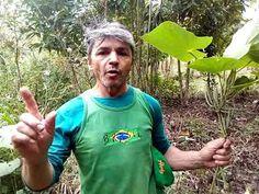 Capeba planta que salvou minha vida - YouTube Maria Jose, Plantar, Youtube, Make It Yourself, Crockpot, Medicinal Plants, Natural Remedies, Home Remedies, Health Tips