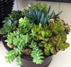 Imagen 31 Succulent Pots, Cacti And Succulents, Planting Succulents, Cactus E Suculentas, Growing Gardens, Succulents In Containers, Miniature Plants, Outdoor Planters, Autumn Garden