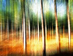 "Check out new work on my @Behance portfolio: ""Abstract forest"" http://be.net/gallery/49651731/Abstract-forest"