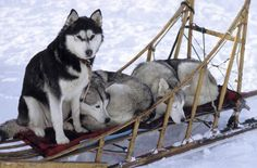 Résultats Google Recherche d'images correspondant à http://int.rendezvousenfrance.com/sites/default/files/parc_naturelregional_du_queyrasle_col_agnel._traineau_sur_lequel_sont_trois_chiens_husky.aiguilles.jpg
