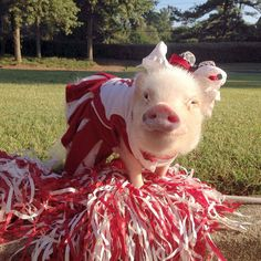 Two Of The Cutest Mini Pigs Are The Greatest Fashion Models Of Instagram