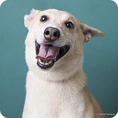 09/09/16-Anniston, AL - Husky Mix. Meet Luke, a dog for adoption. http://www.adoptapet.com/pet/14571742-anniston-alabama-husky-mix