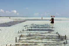 Seaweed Farm | mikelac01