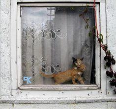 karmasadakiparanoyak:    Son zamanlarda gördüğüm en şeker kedi fotoğrafı!