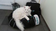 Banjo älskar väskor
