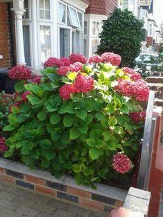 hortenzia14 Container Flowers, Horticulture, Plants, Gardening, Decor, Lawn And Garden, Creative, Decoration, Garden Planning