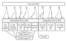 great image of swing and stance phase of the gait cycle