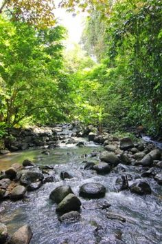 River in the rainforest - protected area by Work with Nature.