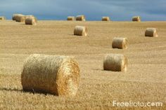 round bales   Round Hay Bales pictures, free use image, 07-15-9 by FreeFoto.com