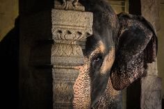 The Sunday Chapter: The Chained Elephant - Seeds: Bloom Faith
