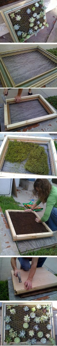 DIY Succulent frame - a few of these can be a nice feature on the blank portions of the back wall or near the front door on the inside wall of the entry. Succulents will spread so no need to plant the whole frame. Let them fill in. Mist with water more regularly then you would succulents in the ground. Paint the frames the color of the trim of the house in tone with the rest of the landscape.