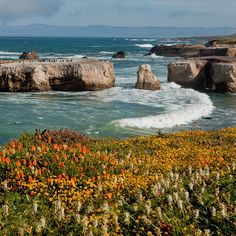Point Buchon San Luis Obispo County, California has one of the best seaside poppy meadows. Approximately 6 km long and up to 0.8 km wide stretch of seaside plain is covered with millions of bright orange California poppies. // localadventurer.com