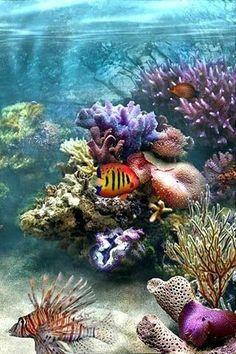 Underwater Creatures, Underwater Life, Ocean Creatures, Aquarium Photos, Beautiful Sea Creatures, Sea Plants, Life Under The Sea, Ocean Pictures, Salt Water Fish