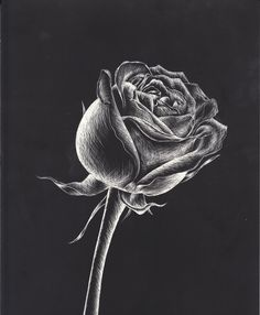 Ideas For Drawing Art Lessons Middle School Black Paper - Tiere - Chalk Art Black And White Art Drawing, Black Paper Drawing, Black White Art, Pencil Art Drawings, Easy Drawings, Drawing Art, Drawing Ideas, Charcole Drawings, Charcoal Art