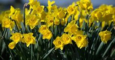 Today marks the first day of Spring. Here's everything you need to know about the Vernal Equinox 2016