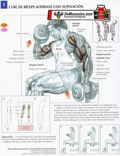 Curl bíceps alternos con supinación (Más ejercicios y rutinas en www.EJERCICIOS.demusculos.com)