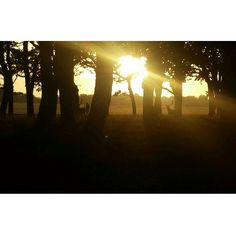 Went for a walk in the Phoenix Park. It really lifts your soul.turned around and seen the deer grazing peacefully. Your Soul, Phoenix, Deer, Ireland, Walking, Sunset, Park, Instagram Posts, Outdoor