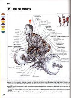 Trap bar deadlifts anatomy