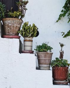 Pots on the stairs! I cant keep a plant alive to save my life  But Im loving other peoples efforts!  How about you are you a plant person?
