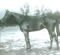 Teddy(1913)(Colt)Ajax- Rondeau By Bay Ronald. 3x5 To Bend Or, 4x5x5 To Galopin. 8 Starts 6 Wins 1 Third. Won Gran Premio San Sebastian(Spain), San Sebastian St Leger(Spain), Prix De Darney(Fr). Leading Sire In France In 1923. Sire Of La Troienne, Bull Dog, Sir Gallahad III & Brumeux, Among Many Others.