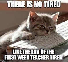 tired cat | THERE IS NO TIRED LIKE THE END OF THE FIRST WEEK TEACHER TIRED! | image tagged in tired cat | made w/ Imgflip meme maker